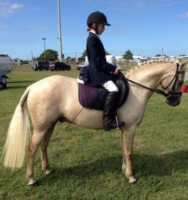 Eye catching Palomino Pony