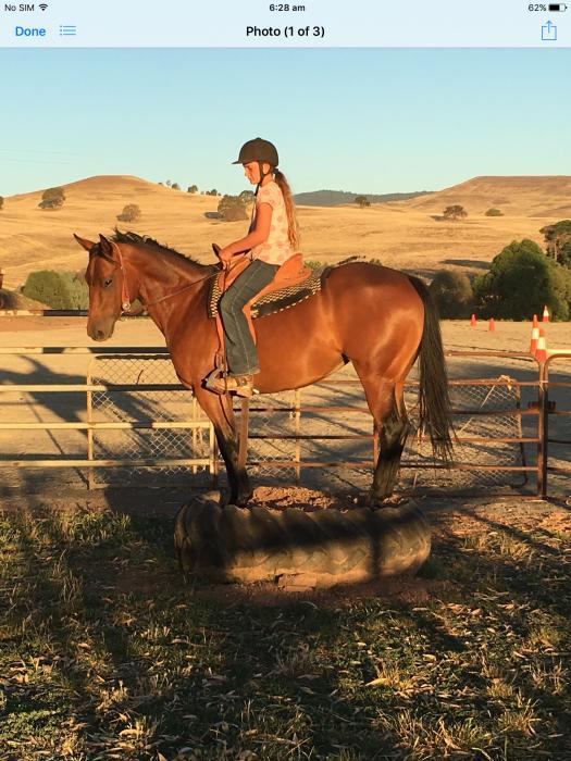 Ladies horse