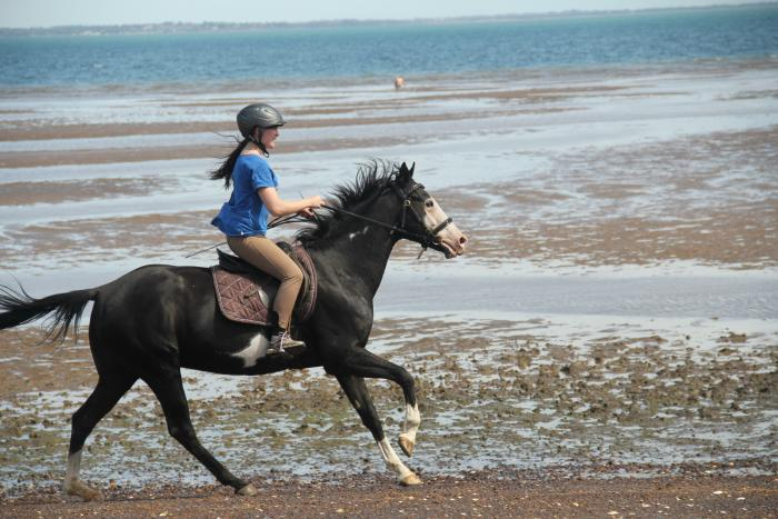 Striking black & white paint gelding, well trained