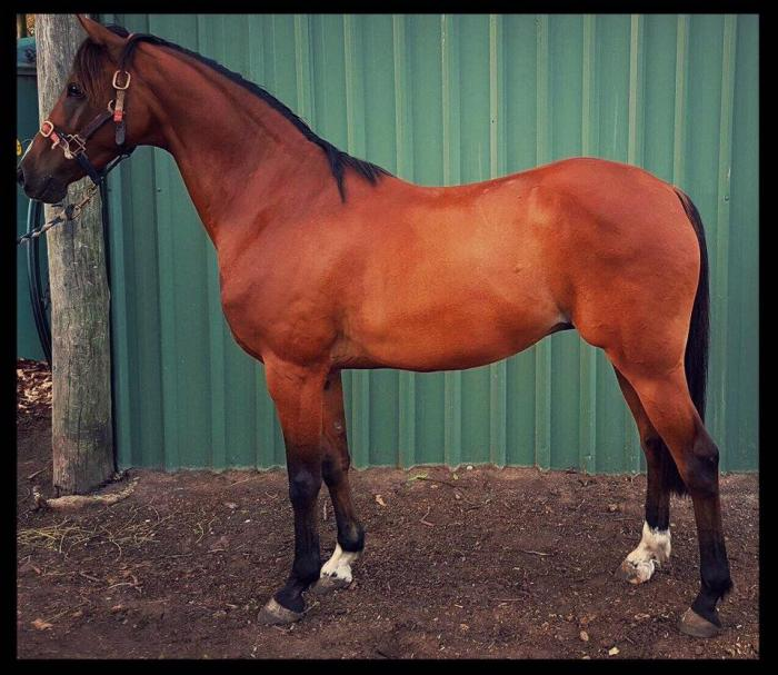 Newcomer Pony