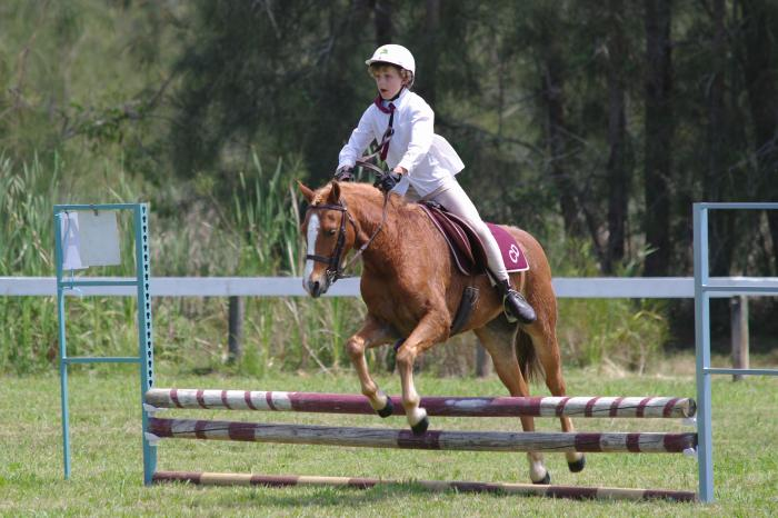 Welsh pony 13hh 15yo - Show or ponyclub