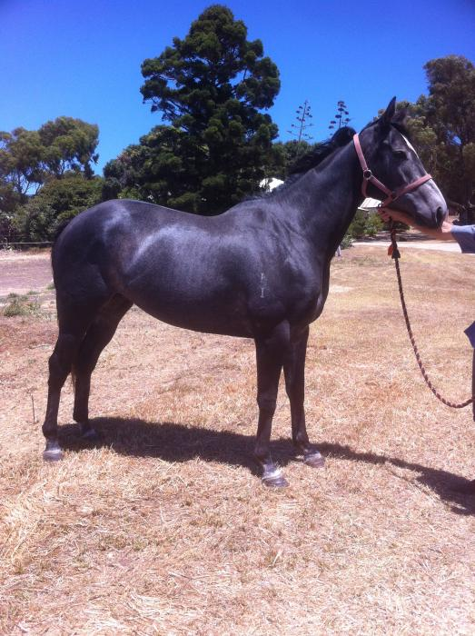 Grey Mare - Lovely Strong Type