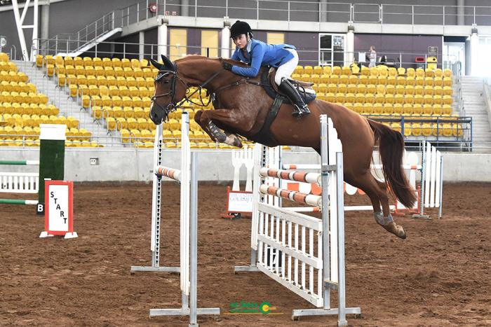 Talented and Competitive Showjumper