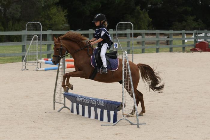 Bombproof schoolmaster pony for beginner