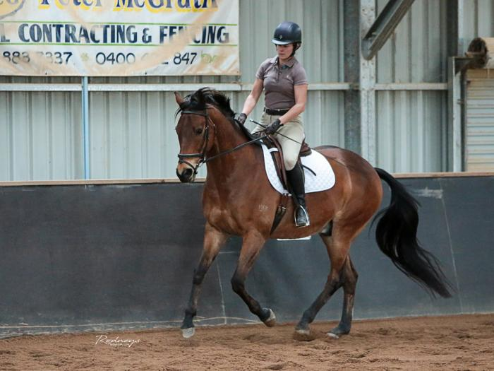 Stunning Dressage Prospect for AOR/Older Teen