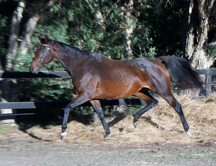 True Target lovely 10 yo TB mare Talented Allround