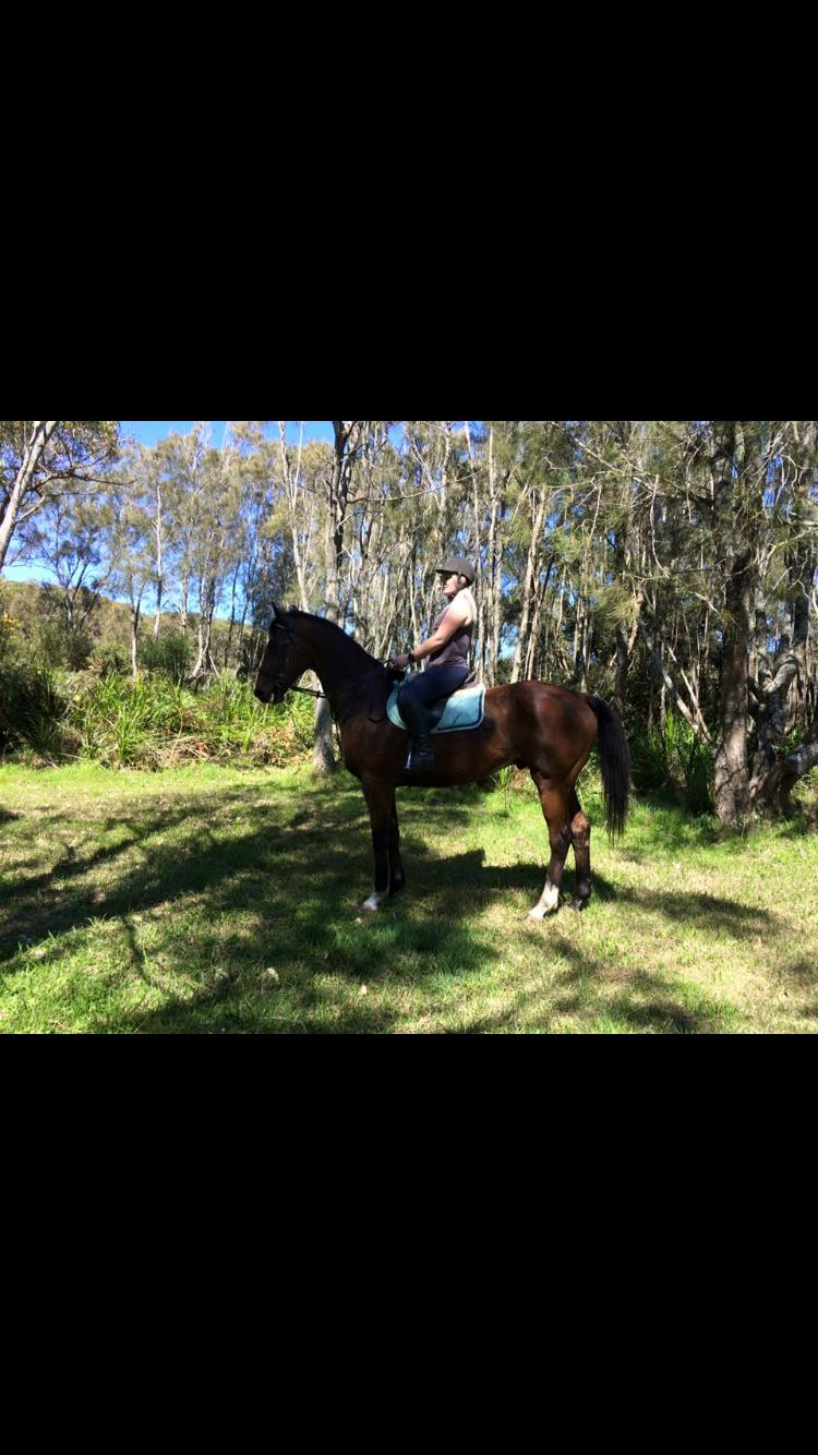 Talented eventer pony club allrounder