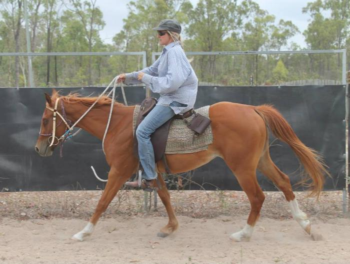 Reg. AQHA 3yo Filly.