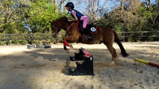 Quiet all rounder WM pony