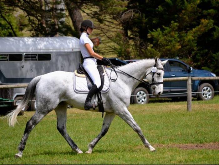 Grey pony club allrounder