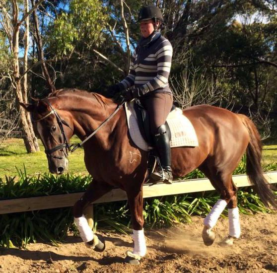 Alabaster gelding bred for dressage