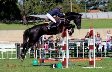 Adalis Sydney foal (SA State SJ team)