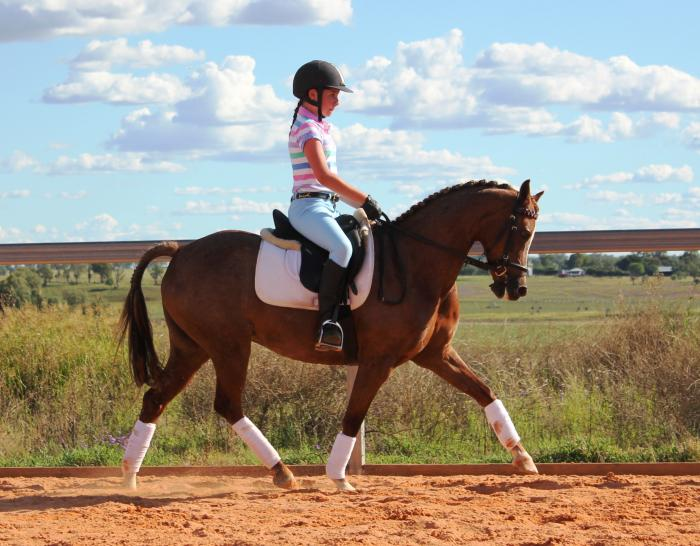 Interschool Allrounder- Show/Dressage/Jump