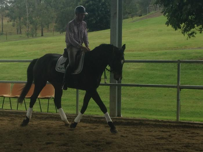Exceptional Dressage Breeding, Trained to Novice