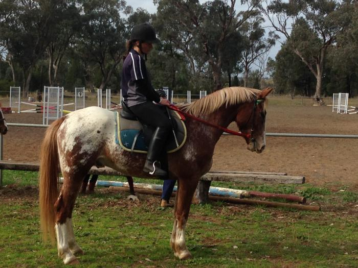 FOR SALE - APPALOOSA GELDING READY FOR A NEW HOME