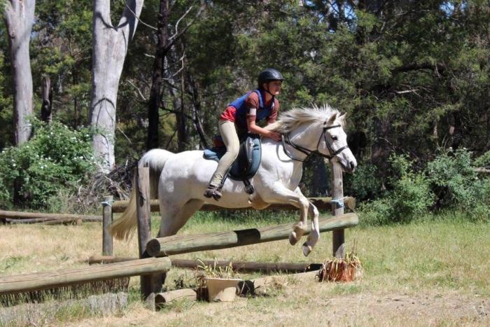 Pony club Mount