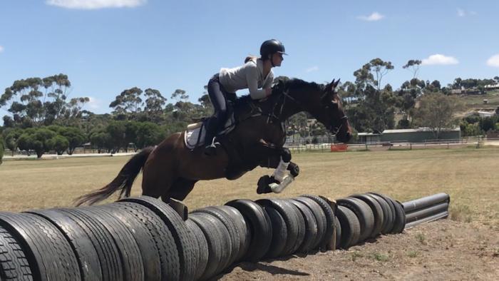 Super Peformance horse