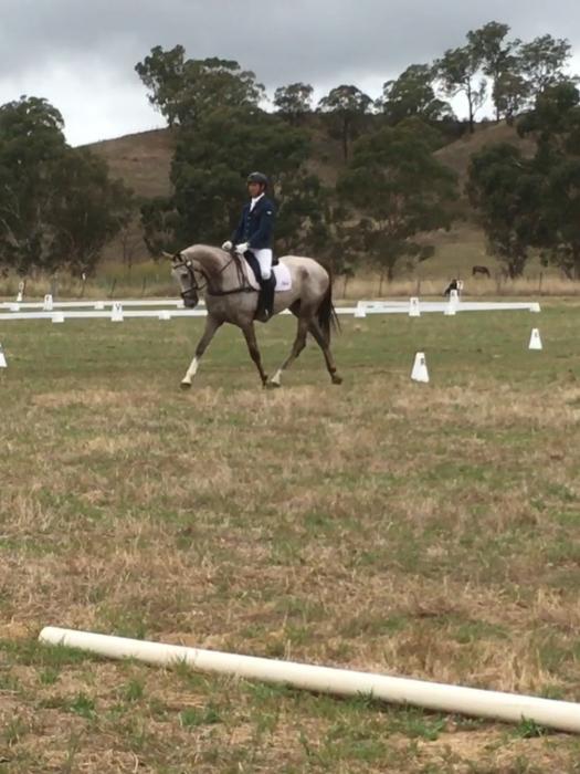 5yr Eye Catching Performance Horse