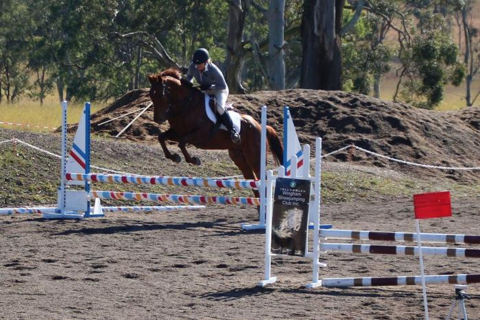 Talented Performance Horse.