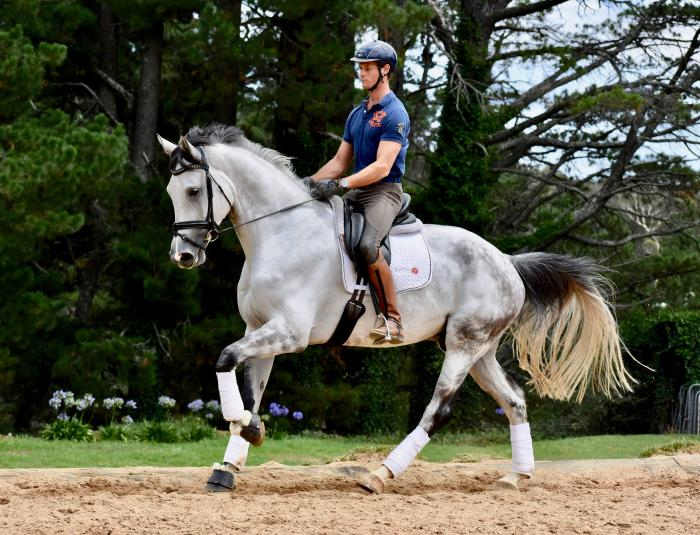 Quality 5yr old Dressage Warmblood by Floriscount