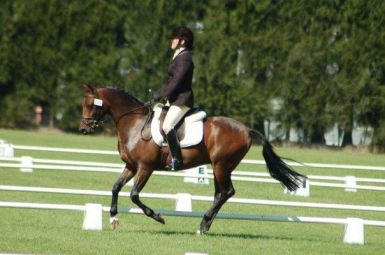 Dressage at NZ Horse of the Year 2010