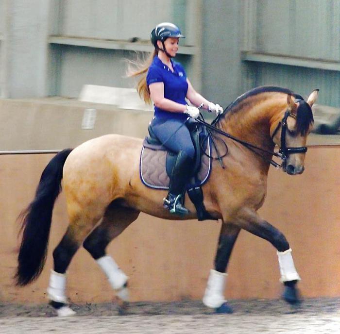 CELERE - Imported Lusitano FEI Dressage stallion