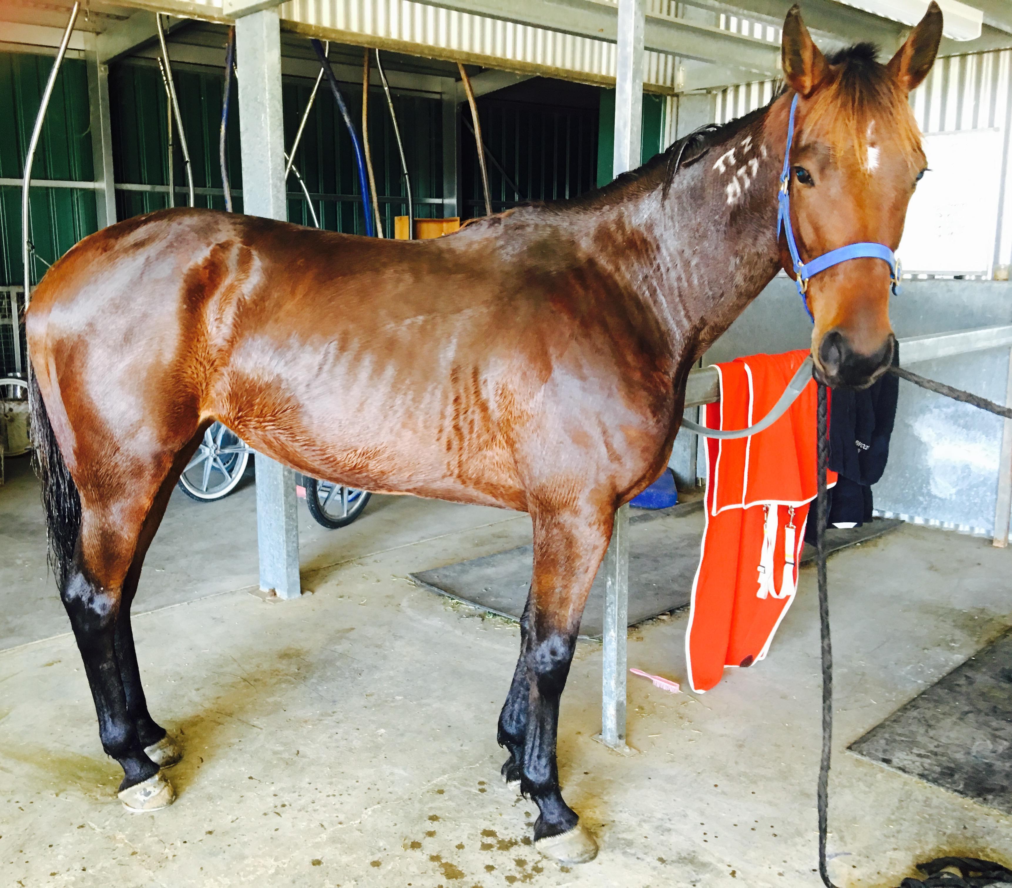 Beautiful mare