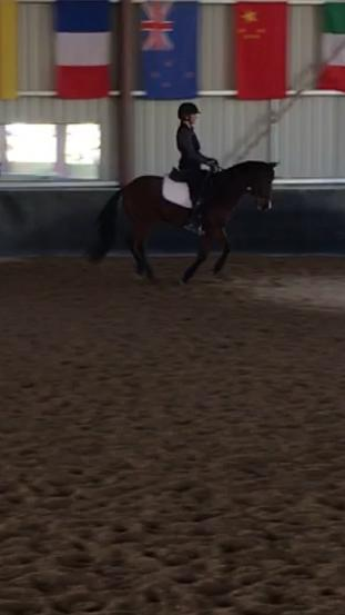 Warmblood Andalusian Thoroughbred Dressage