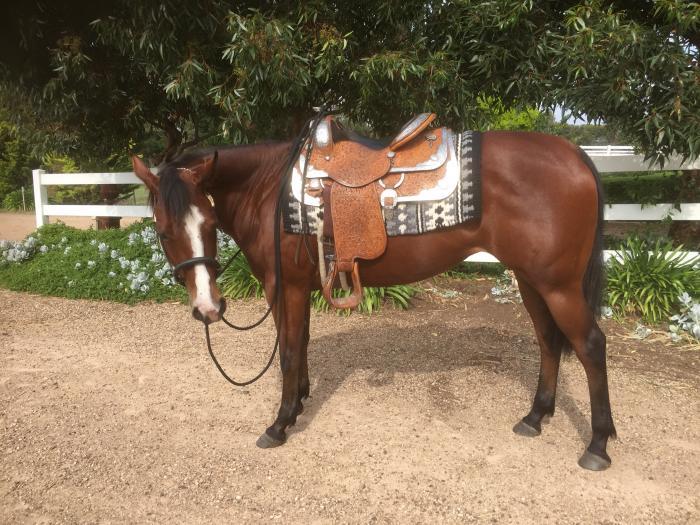 Western Pleasure AAA mare