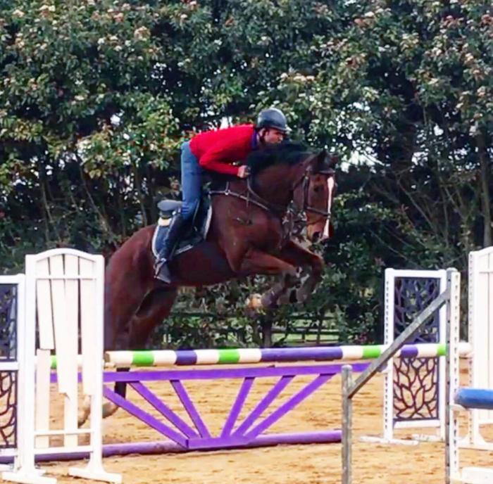 Quality Young Showjumper or Eventer