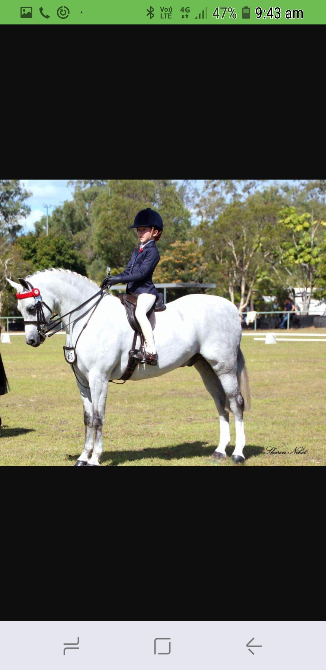 Multi champion show hunter pony