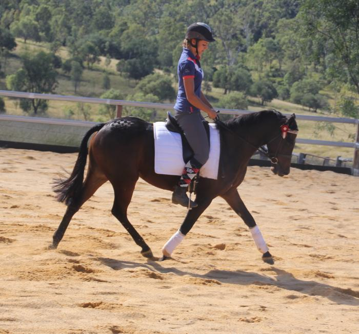 Newcomer Large Pony
