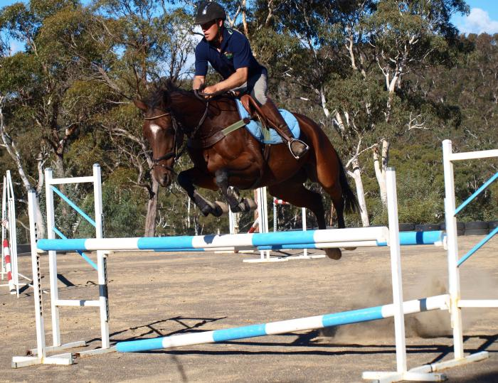 Safe and Reliable Showjumper / Allrounder