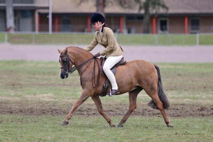 Child's Performance Pony