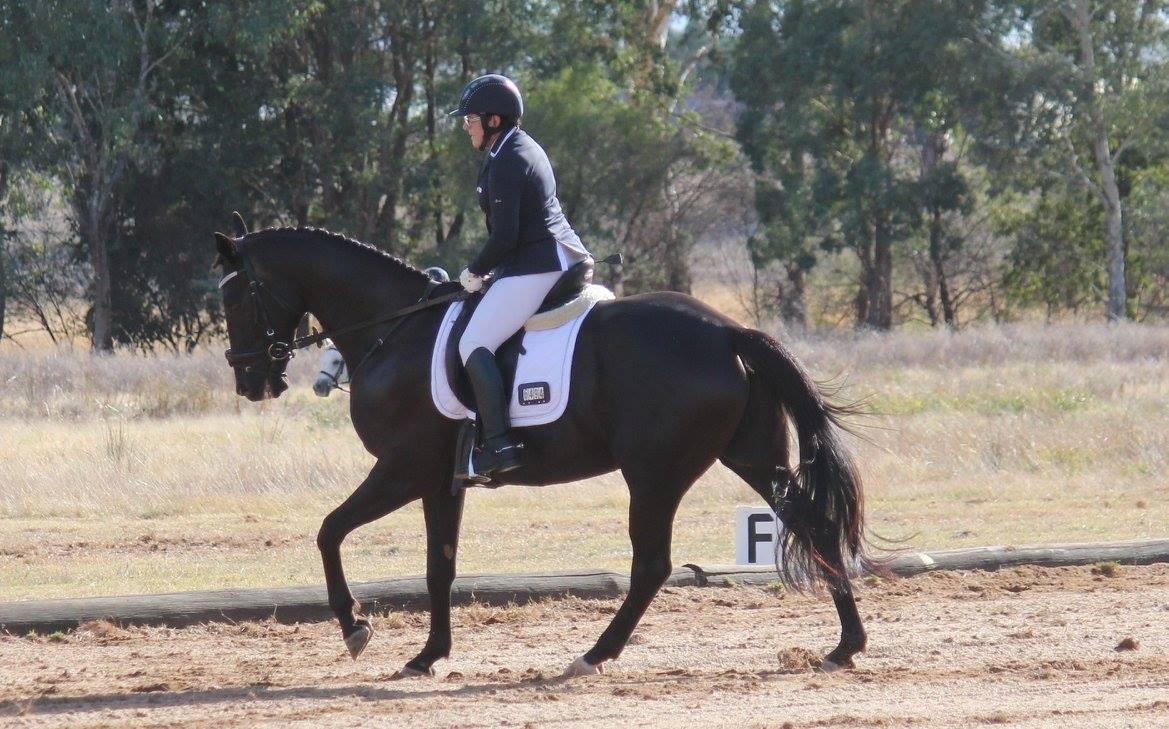 Black Warmblood Dressage Gelding