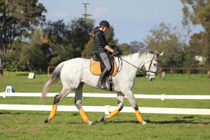 Grey Pony Club Allrounder