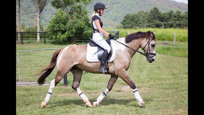 Cool and genuine gelding!