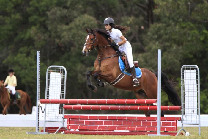 Perfect Allrounder - Performance Pony