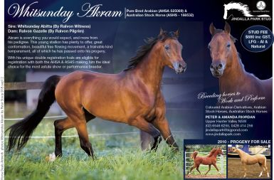 In foal to Whitsunday Akram