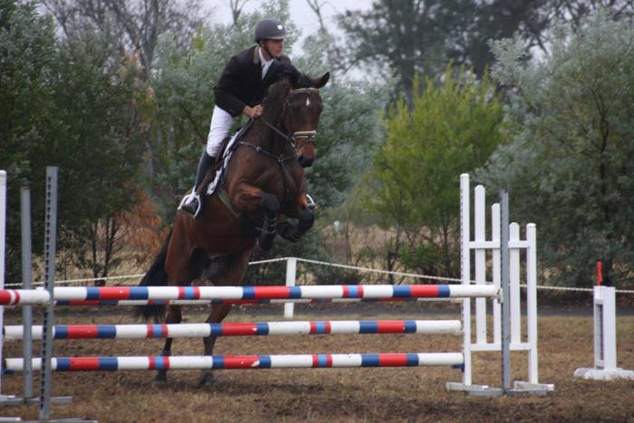 Talented Showjumping Prospect by Chico's Boy