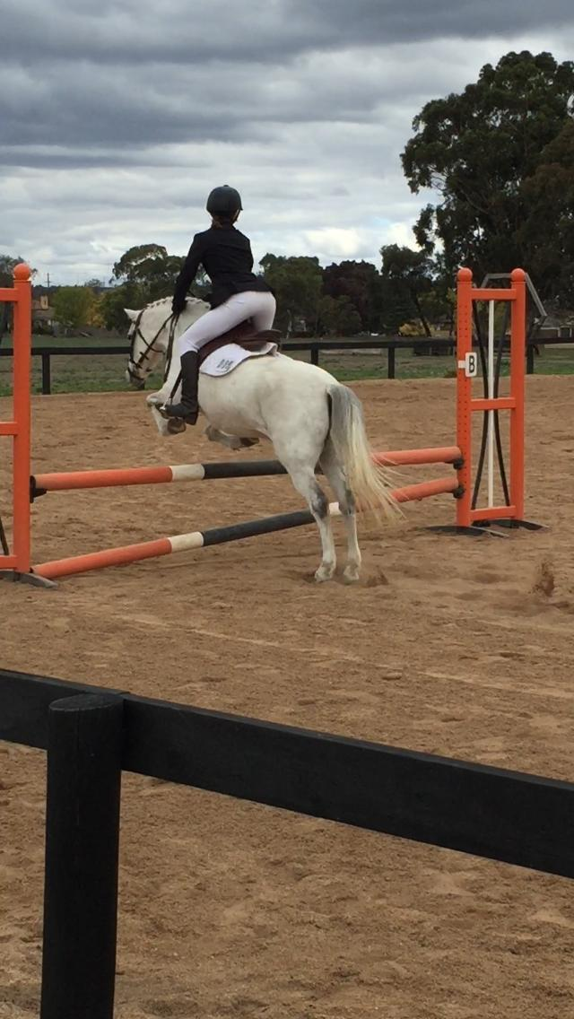 Talented athletic pony