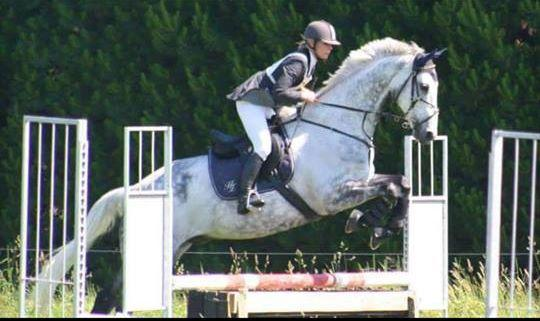NEW ZEALAND SPORT HORSE - REDUCED MUST GO