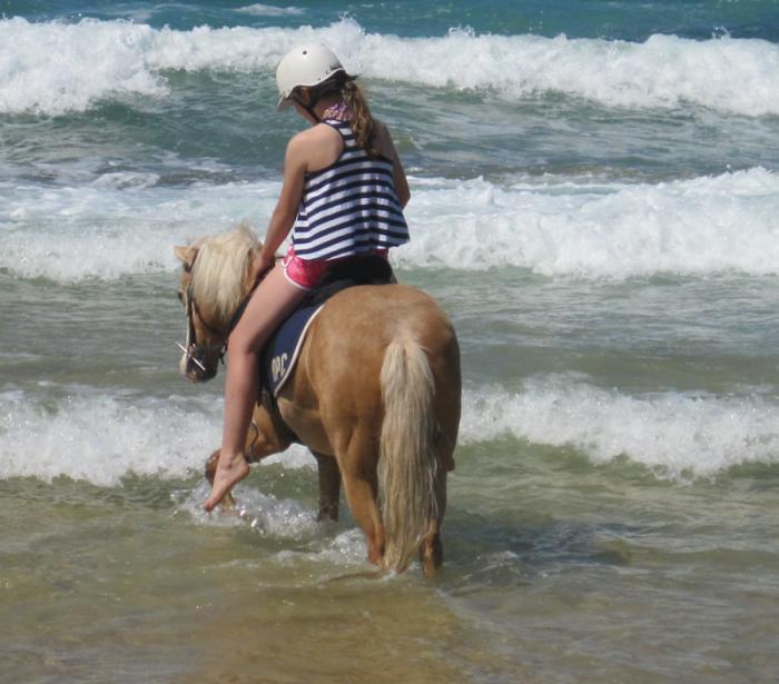 Mother's Dream Pony