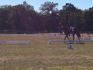 Over 63% first official dressage day