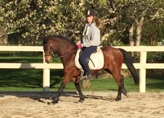 MOUSE 12'2 Riding Pony
