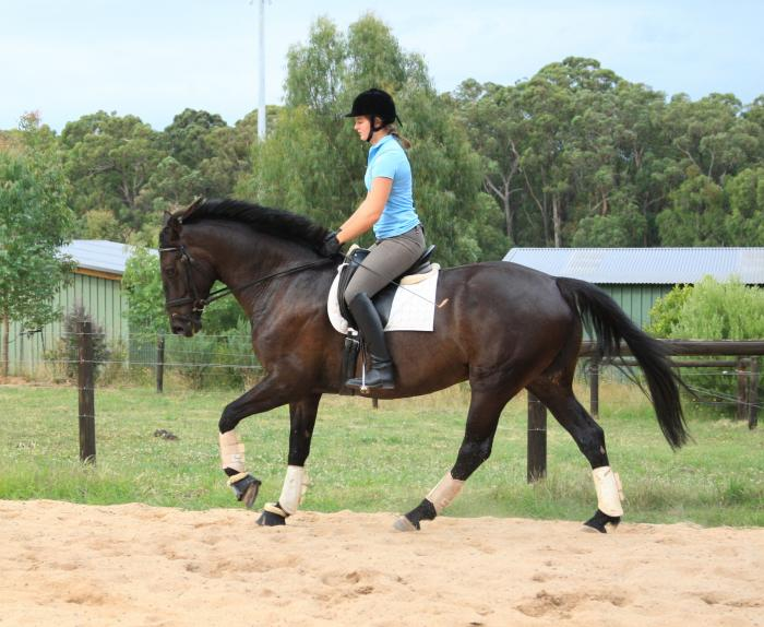 Dashing and sweet gelding