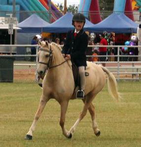 Pretty Palomino Pony Mare