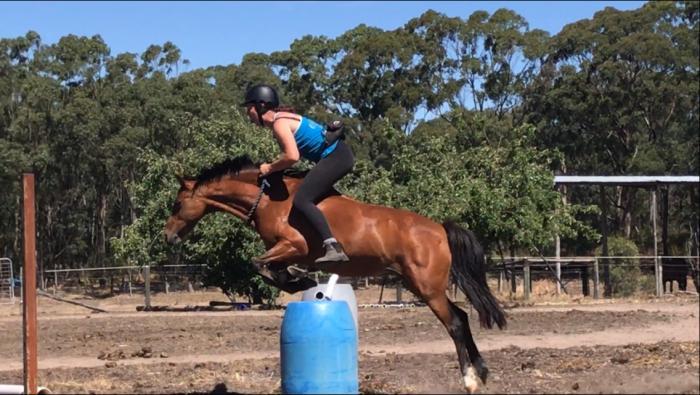 Schoolmaster Pony