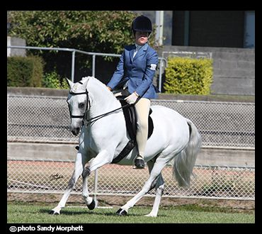Tasmanian HoTY Large hunter Pony 2012 Top 5 (Sandy Morphett Photography)