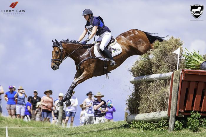Super 7yr Event Horse